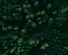 #214 Vidíte přes všechny stromy les?